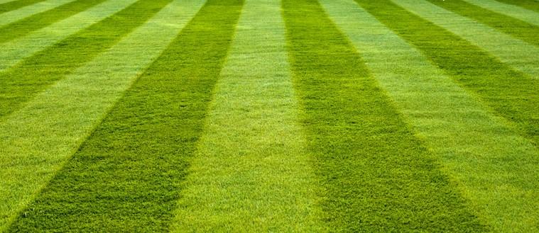 Travu kosite jedan do dva puta tjedno